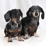 Finnegan & Rampage - Adopted!