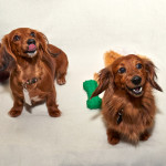 Bailey & Harlow - Adopted!