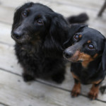 Available - Leila & Rose (Bonded)