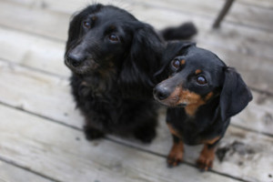Leila & Rose - Adoption Pending!