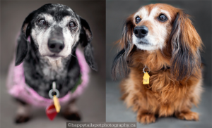 Sassy & Sugar - senior female pair