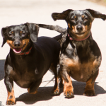 Available - Olive & Lily (Bonded pair)