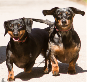 Olive & Lily -Adoption Pending!