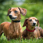 Brutus & Levy - Adopted