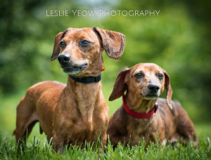 Available - Brutus & Levy (Bonded Pair)