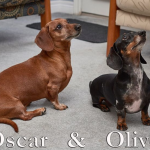 Olive & Oscar - Adopted!