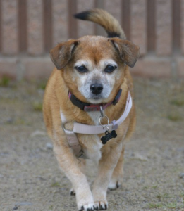 Available - Peggy