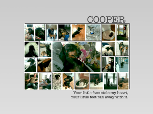 Cooper - June 20, 2013 – March 1, 2017,  Forever in our hearts