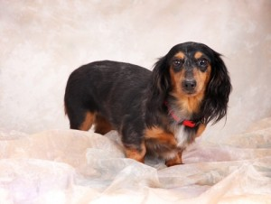 Laverne - Adopted!